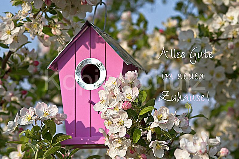 neues zuhause rosa vogelh uschen www stimmungs. Black Bedroom Furniture Sets. Home Design Ideas
