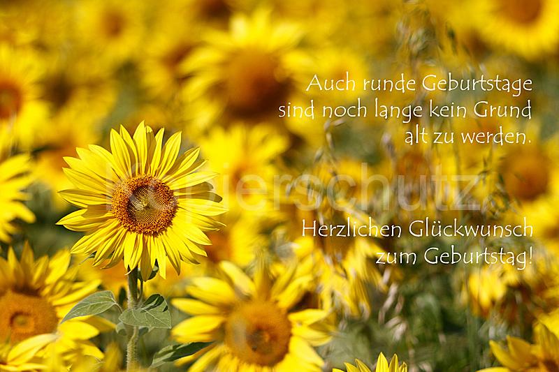 Runde Geburtstage, Sonnenblumen