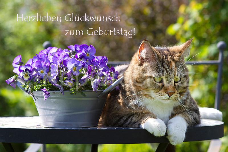 Lucy Cat Meine Nutte