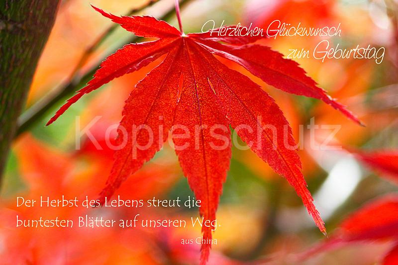 Der Herbst Des Lebens Geburtstag Laub Www Stimmungs Bilder De