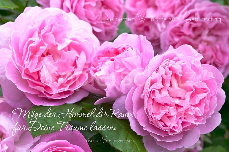 Moge Der Himmel Geburtstag Rosen Www Stimmungs Bilder De