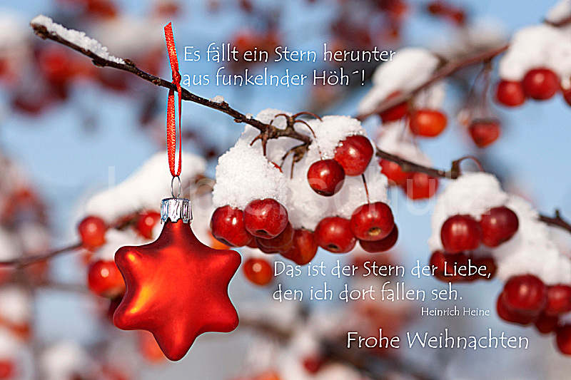 es f llt ein stern heinrich heine weihnachten www. Black Bedroom Furniture Sets. Home Design Ideas