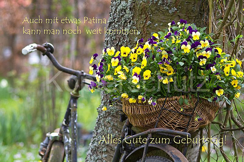 Auch mit Patina, alte Fahrrad, Geburtstag - www.Stimmungs ...