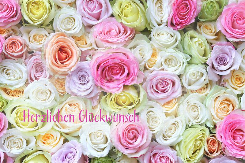herzlichen gl ckwunsch bunte rosen www stimmungs. Black Bedroom Furniture Sets. Home Design Ideas