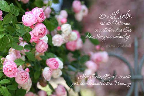 Die Liebe Rose Zur Standesamtlichen Trauung Www Stimmungs